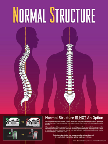Normal Structure at Foundation Chiropractic in Seattle WA